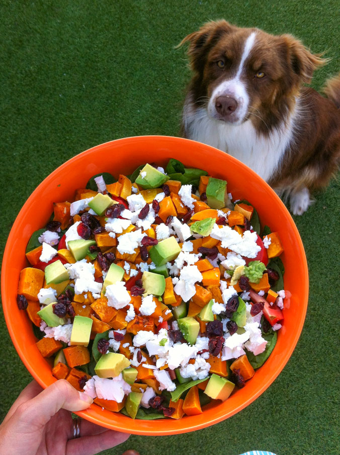 A salad so good that even a dog is excited about it!